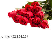Купить «Bouquet of red roses isolated on a white background», фото № 32954239, снято 6 февраля 2017 г. (c) Юлия Бабкина / Фотобанк Лори