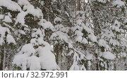 Купить «Wood in snow. Winter landscape», видеоролик № 32972991, снято 22 января 2020 г. (c) Ильин Сергей / Фотобанк Лори