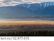 Morning in the Kurai steppe, view of the North Chuysky ridge. Kosh-Agachsky District, Altai Republic, Russia. Стоковое фото, фотограф Вадим Орлов / Фотобанк Лори