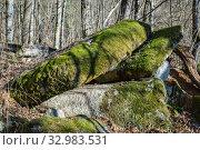Купить «Краснодарский край, Туапсинский район, разрушенный дольмен в урочище Казачья Щель», фото № 32983531, снято 20 января 2020 г. (c) glokaya_kuzdra / Фотобанк Лори