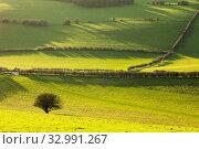 Купить «Winter afternoon in South Downs National Park, West Sussex, England.», фото № 32991267, снято 25 декабря 2019 г. (c) age Fotostock / Фотобанк Лори