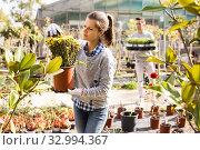 Купить «Two workers look after flowers in orangery», фото № 32994367, снято 8 ноября 2019 г. (c) Яков Филимонов / Фотобанк Лори