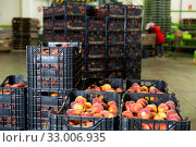 Купить «Boxes of fresh harvested peaches», фото № 33006935, снято 6 апреля 2020 г. (c) Яков Филимонов / Фотобанк Лори