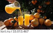 Купить «Fresh orange juice in glassware with ripe oranges on wooden board in orchard», видеоролик № 33013467, снято 14 января 2020 г. (c) Яков Филимонов / Фотобанк Лори