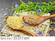 Семя льняное белое и коричневое в ложках с цветами на доске. Стоковое фото, фотограф Резеда Костылева / Фотобанк Лори