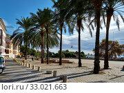Sunny coastal palm lined street empty promenade leading along Mediterranean Sea, Palma de Mallorca, Baleares, Spain (2018 год). Стоковое фото, фотограф Alexander Tihonovs / Фотобанк Лори