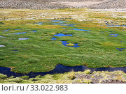 Купить «Bofedal is a kind of wetland found in Bolivia, Chile and Peru Andes. This ecosystem is dominated by Juncaceae plants like Distichia muscoides and Oxychloe...», фото № 33022983, снято 21 ноября 2019 г. (c) age Fotostock / Фотобанк Лори