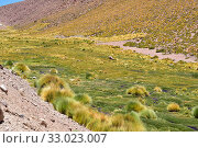 Купить «Bofedal is a kind of wetland found in Bolivia, Chile and Peru Andes. This ecosystem is dominated by Juncaceae plants like Distichia muscoides and Oxychloe...», фото № 33023007, снято 27 ноября 2019 г. (c) age Fotostock / Фотобанк Лори