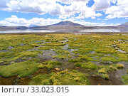 Купить «Bofedal is a kind of wetland found in Bolivia, Chile and Peru Andes. This ecosystem is dominated by Juncaceae plants like Distichia muscoides and Oxychloe...», фото № 33023015, снято 21 ноября 2019 г. (c) age Fotostock / Фотобанк Лори