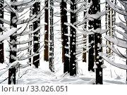 Купить «Wald, forest, Schnee, snow, schneebedeckt, verschneit, trees, Bäume, Fichten, pine, nature, Natur, cold, frost, Kälte, kalt, Frost, weiss, white», фото № 33026051, снято 27 мая 2020 г. (c) easy Fotostock / Фотобанк Лори