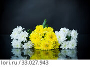 Купить «bouquet of white chrysanthemums with a greeting card for mom», фото № 33027943, снято 4 февраля 2020 г. (c) Peredniankina / Фотобанк Лори