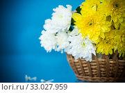 Купить «bouquet of white chrysanthemums with a greeting card for mom», фото № 33027959, снято 4 февраля 2020 г. (c) Peredniankina / Фотобанк Лори