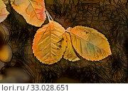 Купить «Yellow leaves on the sky background in autumn», иллюстрация № 33028651 (c) Парушин Евгений / Фотобанк Лори