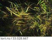 Купить «Drops on leaves in the pond at the warm winter», иллюстрация № 33028667 (c) Парушин Евгений / Фотобанк Лори