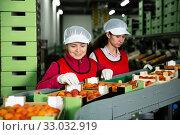 Купить «Nice female sorting apricots on producing line», фото № 33032919, снято 21 февраля 2020 г. (c) Яков Филимонов / Фотобанк Лори