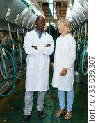 Milkmaids man and woman standing near automatical cow milking machines. Стоковое фото, фотограф Яков Филимонов / Фотобанк Лори