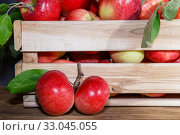 Купить «Seasonal harvest of autumn summer harvest in the garden at the warehouse. Fresh ripe red apples with leaves in a wooden box on the table. Fruit in a crate. Healthy vitamin diet vegetarian food», фото № 33045055, снято 22 сентября 2019 г. (c) Светлана Евграфова / Фотобанк Лори