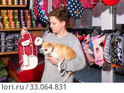 Teenager with chihuahua choosing clothes for dog in petshop. Стоковое фото, фотограф Яков Филимонов / Фотобанк Лори