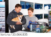 Positive teenager with dog of chihuahua breed in pet store. Стоковое фото, фотограф Яков Филимонов / Фотобанк Лори