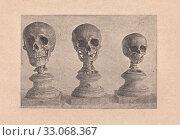 Купить «Пособия для рисования: череп взрослого человека, старика и ребенка», иллюстрация № 33068367 (c) Илюхина Наталья / Фотобанк Лори