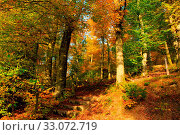 Купить «Trees with golden leaves in autumn and sunrays.Colorful autumn background.», фото № 33072719, снято 18 февраля 2020 г. (c) easy Fotostock / Фотобанк Лори