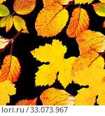 Купить «A seamless autumn leaves pattern on a black background, a fall repeat print», фото № 33073967, снято 24 февраля 2020 г. (c) easy Fotostock / Фотобанк Лори