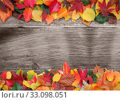 Купить «colorful autumn leaves on old wood», фото № 33098051, снято 18 февраля 2020 г. (c) PantherMedia / Фотобанк Лори
