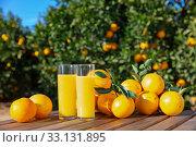 Купить «Fresh oranges and orange juice», фото № 33131895, снято 29 мая 2020 г. (c) Яков Филимонов / Фотобанк Лори