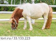 Купить «Dwarf horses eating grass», фото № 33133223, снято 3 июня 2020 г. (c) PantherMedia / Фотобанк Лори