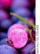 Купить «Macro view of frozen berries: blackcurrant, redcurrant, blueberry», фото № 33155435, снято 13 июля 2020 г. (c) age Fotostock / Фотобанк Лори