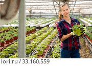 Glad farmer engaged in cultivation portulaca. Стоковое фото, фотограф Яков Филимонов / Фотобанк Лори