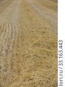 harvested cornfield in spain. Стоковое фото, фотограф Ernesto Rosé / PantherMedia / Фотобанк Лори