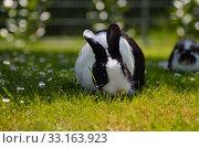 Купить «hare in the grass», фото № 33163923, снято 6 июня 2020 г. (c) PantherMedia / Фотобанк Лори