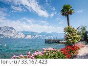 Flowers at Lake Garda. Стоковое фото, фотограф Manfred Angermayr / PantherMedia / Фотобанк Лори