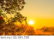 Купить «Early morning sunrise with sunbeams», фото № 33181735, снято 31 мая 2020 г. (c) PantherMedia / Фотобанк Лори