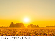 Купить «Wheat field in a beautiful sunrise», фото № 33181743, снято 31 мая 2020 г. (c) PantherMedia / Фотобанк Лори
