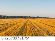 Купить «Field at a farm in the summer», фото № 33181751, снято 31 мая 2020 г. (c) PantherMedia / Фотобанк Лори