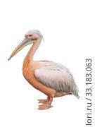 Купить «Pink pelican on a white background isolated», фото № 33183063, снято 9 сентября 2014 г. (c) Наталья Волкова / Фотобанк Лори