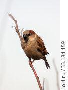Купить «Sparrow in the foreground», фото № 33184159, снято 2 апреля 2008 г. (c) Argument / Фотобанк Лори