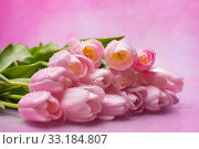 Bouquet of pink tulips on a pink background. Стоковое фото, фотограф Светлана Валуйская / Фотобанк Лори