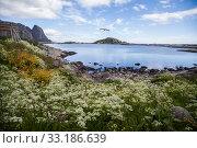 Купить «Stony beach in Lofoten, Norway», фото № 33186639, снято 5 августа 2020 г. (c) PantherMedia / Фотобанк Лори