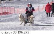Купить «Boy mushing sled dog team, running on distance Sled Dog Race Competitions», видеоролик № 33196275, снято 20 февраля 2020 г. (c) А. А. Пирагис / Фотобанк Лори