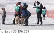 Child mushing sled dog team, running on distance Dog Sled Racing Competition. Редакционное видео, видеограф А. А. Пирагис / Фотобанк Лори