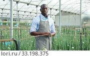 Купить «Portrait of african-american florist in orangery», видеоролик № 33198375, снято 28 февраля 2020 г. (c) Яков Филимонов / Фотобанк Лори