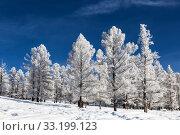 Купить «The Altai mountains on a sunny frosty winter day. Altai Republic, Western Siberia, Russia», фото № 33199123, снято 27 января 2020 г. (c) Наталья Волкова / Фотобанк Лори