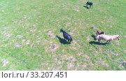 Купить «Flight over wild horses herd on mountain meadow. Summer mountains wild nature. Freedom ecology concept.», видеоролик № 33207451, снято 27 июля 2018 г. (c) Александр Маркин / Фотобанк Лори