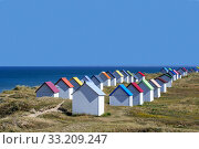 Row of colourful beach cabins in the dunes at Gouville-sur-Mer, Lower Normandy, France. June 2018. Стоковое фото, фотограф Philippe Clement / Nature Picture Library / Фотобанк Лори