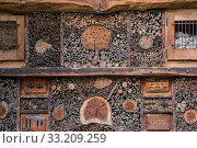 Купить «Insect hotel for solitary bees and artificial nesting place for insects / invertebrates offering nest holes / cavities in hollow stems and wood blocks», фото № 33209259, снято 5 июля 2020 г. (c) Nature Picture Library / Фотобанк Лори