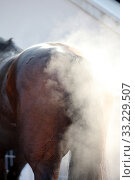Halle (Saale), Germany, horse steaming against the light (2019 год). Редакционное фото, агентство Caro Photoagency / Фотобанк Лори