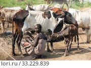 Купить «Belinkum, Gambela, Ethiopia - Traditional livestock breeders, Nuer», фото № 33229839, снято 31 октября 2019 г. (c) Caro Photoagency / Фотобанк Лори